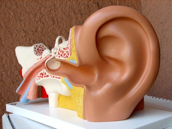 diving ear anatomy and physiology external middle and inner ear