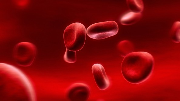 red_blood_cells-wallpaper