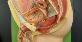 Male_Reproductive_System_4